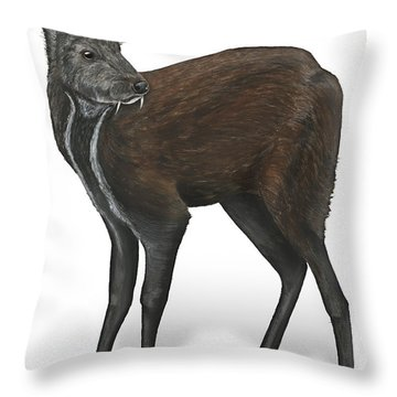 Throw Pillow featuring the painting Siberian Musk Deer Moschus Moschiferus - Chevrotain Porte-musc - Ciervo Almizclero - Moschustier by Urft Valley Art