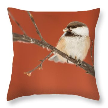 Siberian Tit Parus Cinctus Throw Pillow by Gabor Pozsgai