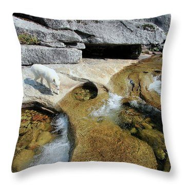 Throw Pillow featuring the photograph Sierra Wild by Sean Sarsfield