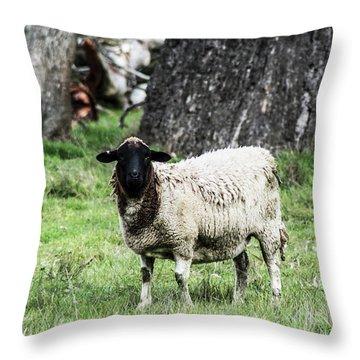 Silence Of The Umm Sheep 1 Throw Pillow