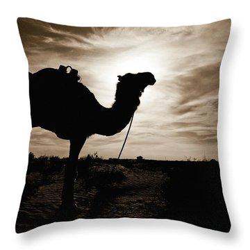 Silhouetted Camel, Sahara Desert, Douz Throw Pillow