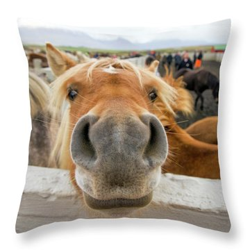 Silly Icelandic Horse Throw Pillow