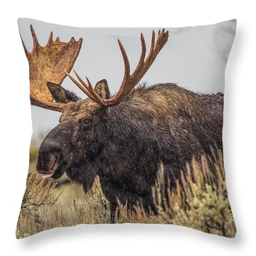 Silly Moose  Throw Pillow by Kelly Marquardt