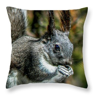 Silver Abert's Squirrel Close-up Throw Pillow