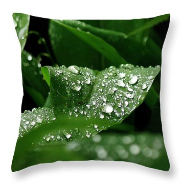 Silver Drops Of Spring Throw Pillow