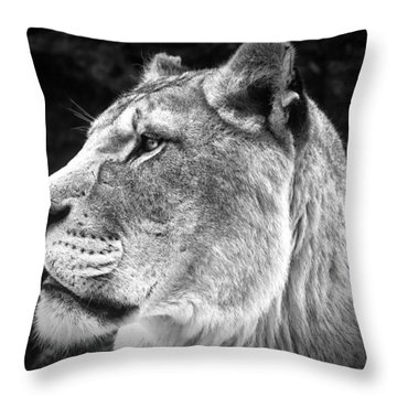 Silver Lioness  Throw Pillow