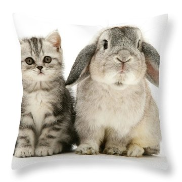 Silver Tabby And Rabby Throw Pillow