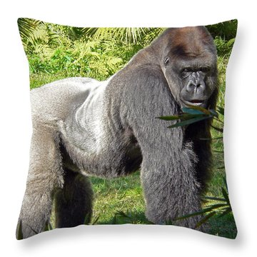 Silverback Throw Pillow by Steven Sparks