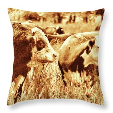 Throw Pillow featuring the photograph Simmental Bull 3 by Larry Campbell