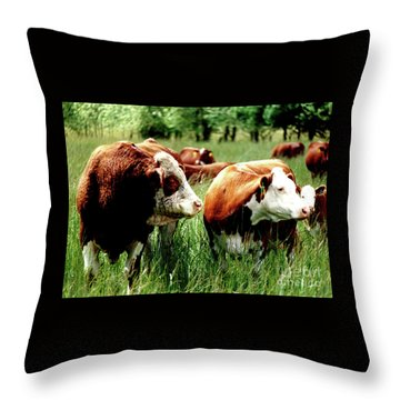 Simmental Bull And Hereford Cow Throw Pillow