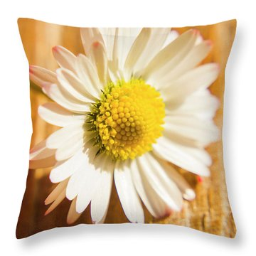 Simple Camomile  In Sunlight Throw Pillow