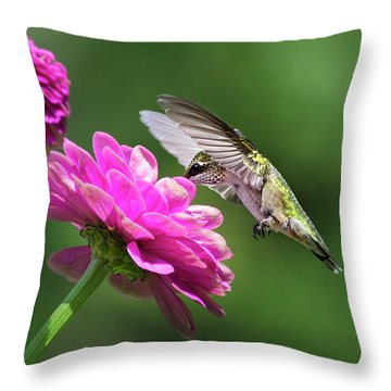 Throw Pillow featuring the photograph Simple Pleasure Hummingbird by Christina Rollo