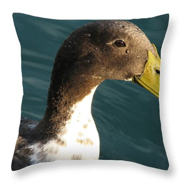 Sincere Glare Throw Pillow