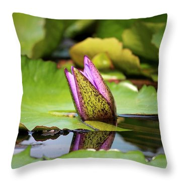 Singapore Bloom Throw Pillow by Diane Height
