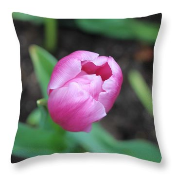 Singapore Flower II Throw Pillow by Diane Height