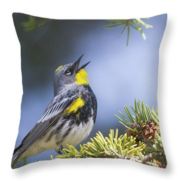 Singing Audubon's Warbler Throw Pillow