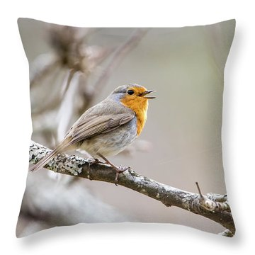 Singing Robin Throw Pillow by Torbjorn Swenelius