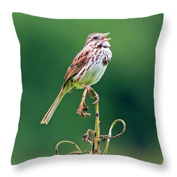 Singing Song Sparrow Throw Pillow