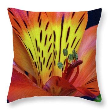 Single Alstroemeria Inca Flower-1 Throw Pillow