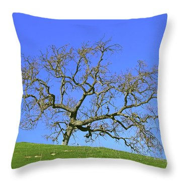 Throw Pillow featuring the photograph Single Oak Tree by Art Block Collections
