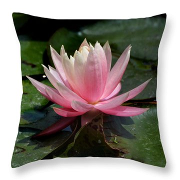 Throw Pillow featuring the photograph Single Pink Water Lily by Kathleen Stephens