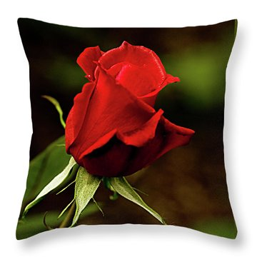 Single Red Rose Bud Throw Pillow