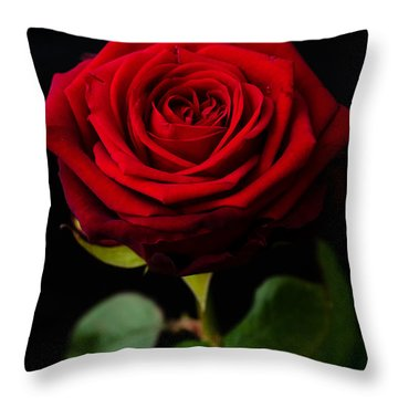 Single Rose Throw Pillow by Miguel Winterpacht