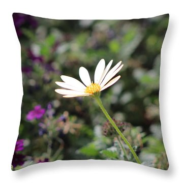 Single White Daisy On Purple Throw Pillow by Colleen Cornelius
