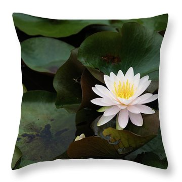 Throw Pillow featuring the photograph Single White Pristine Lotus Lily by Dennis Dame