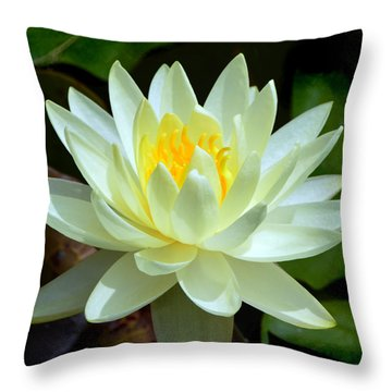 Single Yellow Water Lily Throw Pillow by Kathleen Stephens