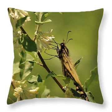 Throw Pillow featuring the photograph Sipping In The Shade by Susan Capuano