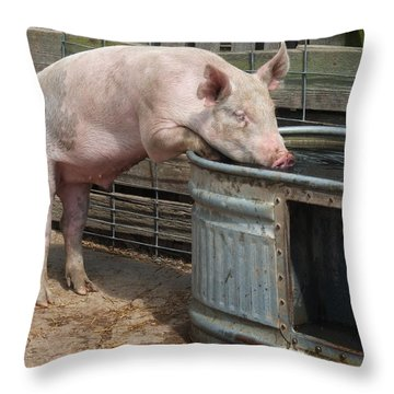 Sipping Pig Throw Pillow by Scott Kingery