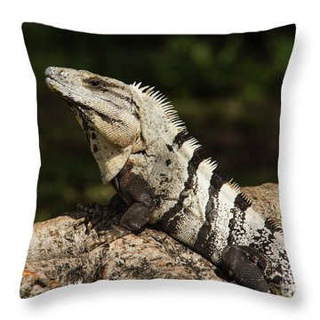Sir Iguana Mexican Art By Kaylyn Franks Throw Pillow
