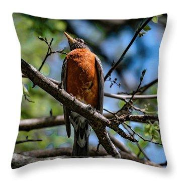 Sir Robin Throw Pillow