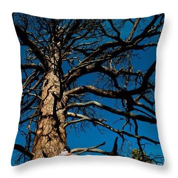Sitting In Tree 2 Throw Pillow by Scott Sawyer