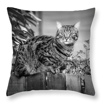 Sitting On The Fence Throw Pillow