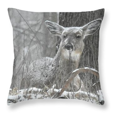 Sitting Out The Storm Throw Pillow by Michael Peychich