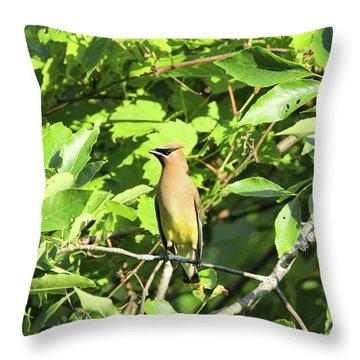 Sitting Pretty Throw Pillow by David Stasiak