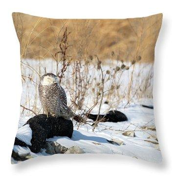 Sitting Snowy Throw Pillow