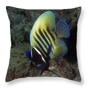 Six Banded Angelfish, Great Barrier Reef Throw Pillow