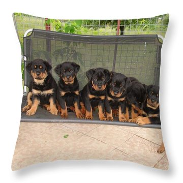 Six Rottweiler Puppies Lined Up On A Swing Throw Pillow by Tracey Harrington-Simpson