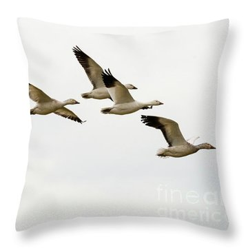 Throw Pillow featuring the photograph Six Snowgeese Flying by Mike Dawson