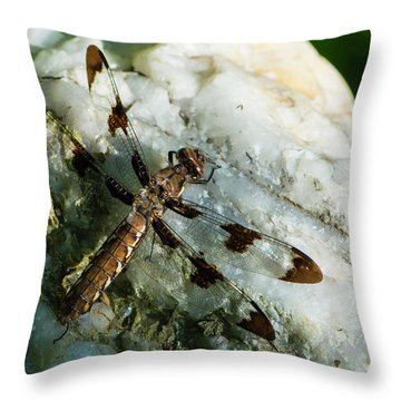 Six Spotted Dragonfly Throw Pillow
