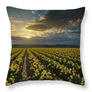 Throw Pillow featuring the photograph Skagit Daffodils Golden Sunstar Evening by Mike Reid