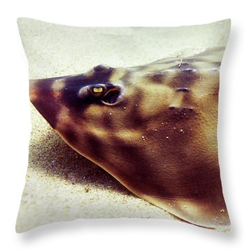 Throw Pillow featuring the photograph Skate by Anthony Jones