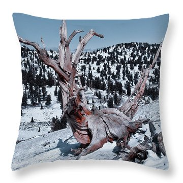 Throw Pillow featuring the photograph Skating Pine by Mae Wertz