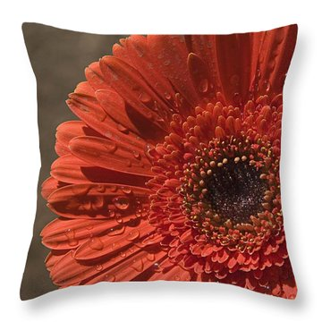 Skc 5127 The Heart Of The Gerbera Throw Pillow by Sunil Kapadia