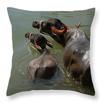 Skc 5603 The Coolest Way Throw Pillow by Sunil Kapadia
