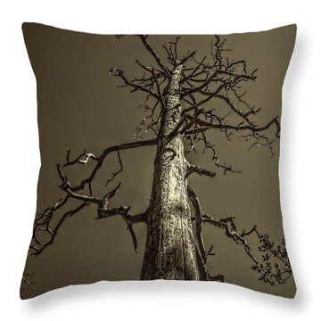 Skeletal Tree Sedona Arizona Throw Pillow