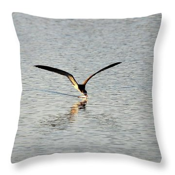 Skimmer Skimming Throw Pillow by Al Powell Photography USA